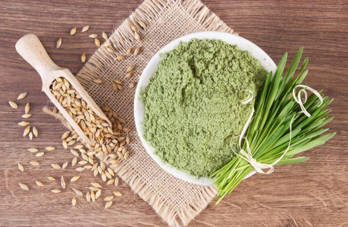 Zelený ječmen – vlastnosti a účinky